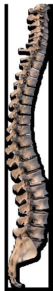 Back Anatomy 101